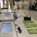 La CàtedraGovernObertimpulsa el desenvolupament d'un sistema presencial de votació electrònica